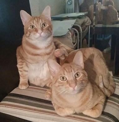 Pim y Puk