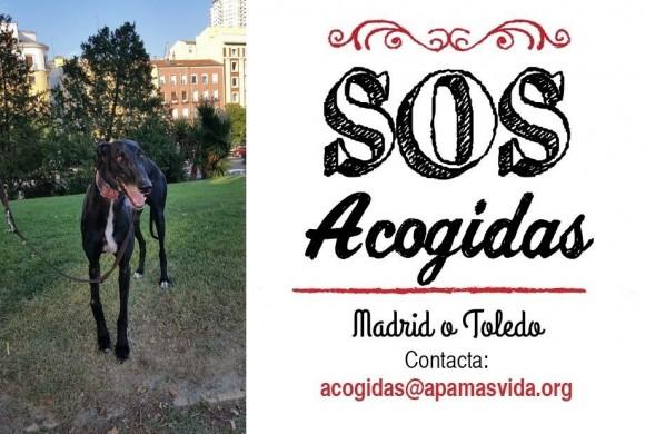 ACOGIDA URGENTE PROVINCIA DE MADRID O TOLEDO
